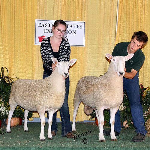 best headed ewe and ram iris larochelle and colin siegmund