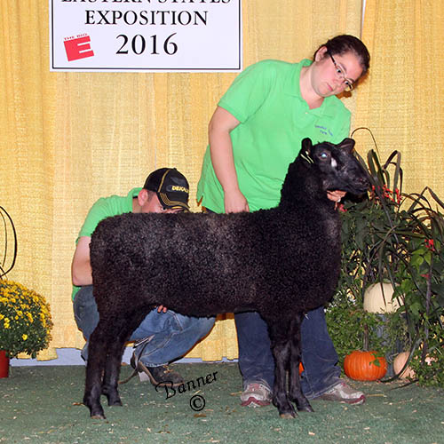 grand champion ewe sarah jakeman