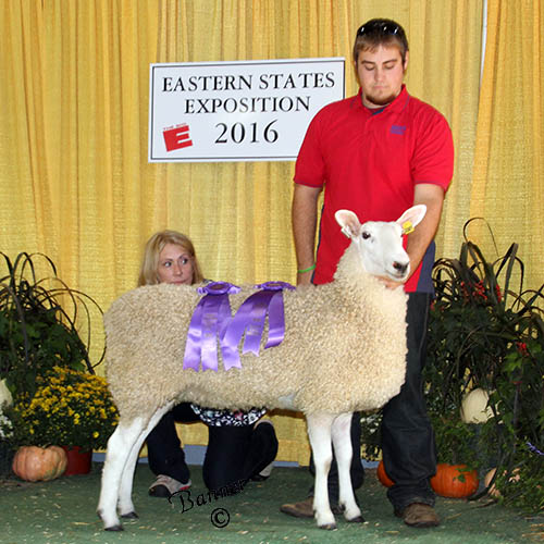 grand champion ewe deakin family farm
