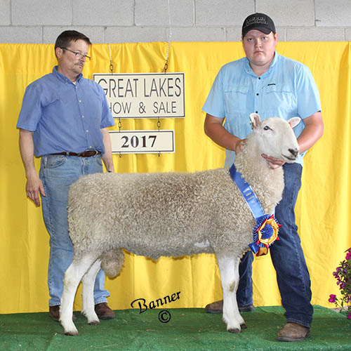 grand champion ram at the 2017 great lakes show and sale