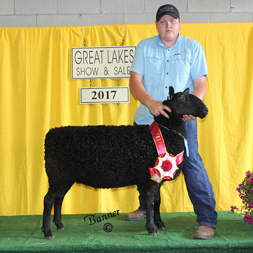reserve champion natural colored ewe at the 2017 great lakes show and sale