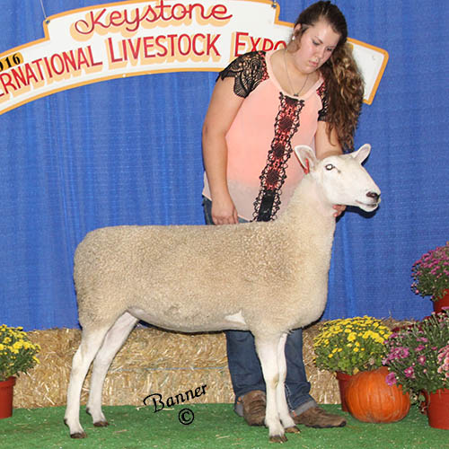 grand champion ewe heidi barkley