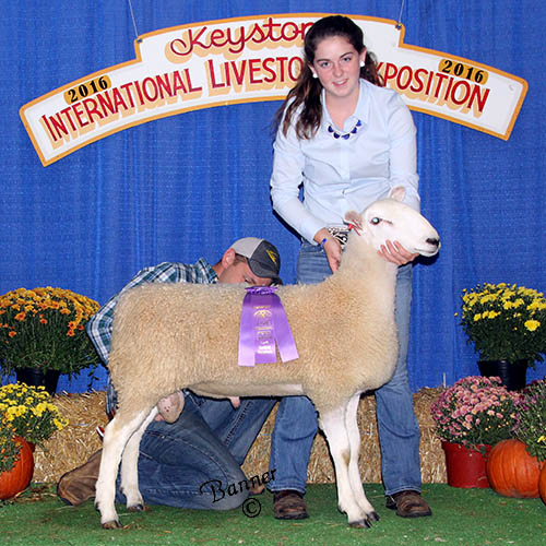 grand champion ram blair steele