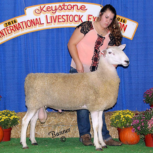 grand champion ram heidi barkley