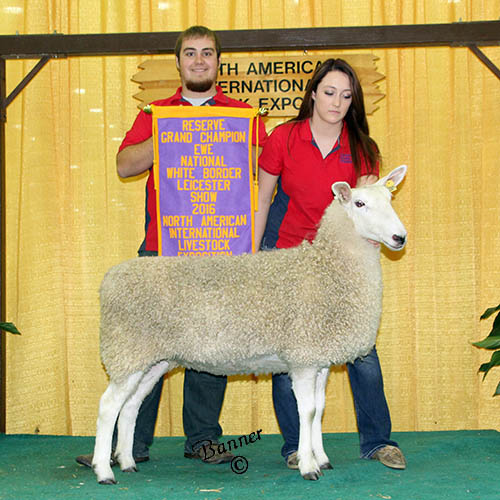 best headed ewe deakin family farms