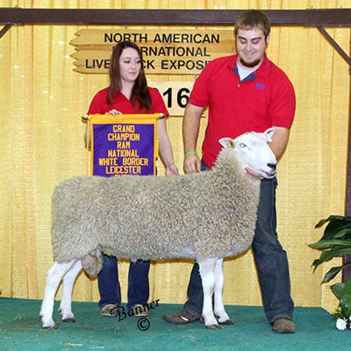 grand champion ram deakin family farms