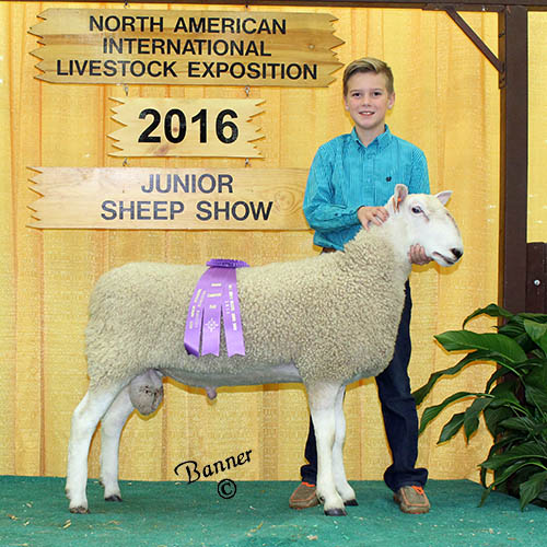 grand champion ram drew thomas