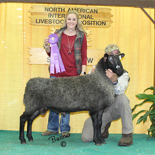 grand champion ram conner and paige vincent