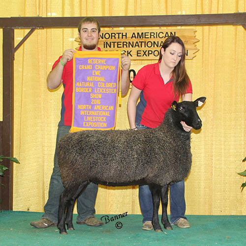 reserve grand champion ewe tiffany deakin