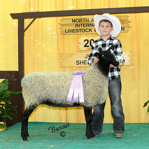 reserve grand champion ewe junior show ben wamsley